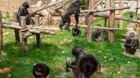 Schoolreis Naar Zoo Antwerpen Schoolreis Nederland